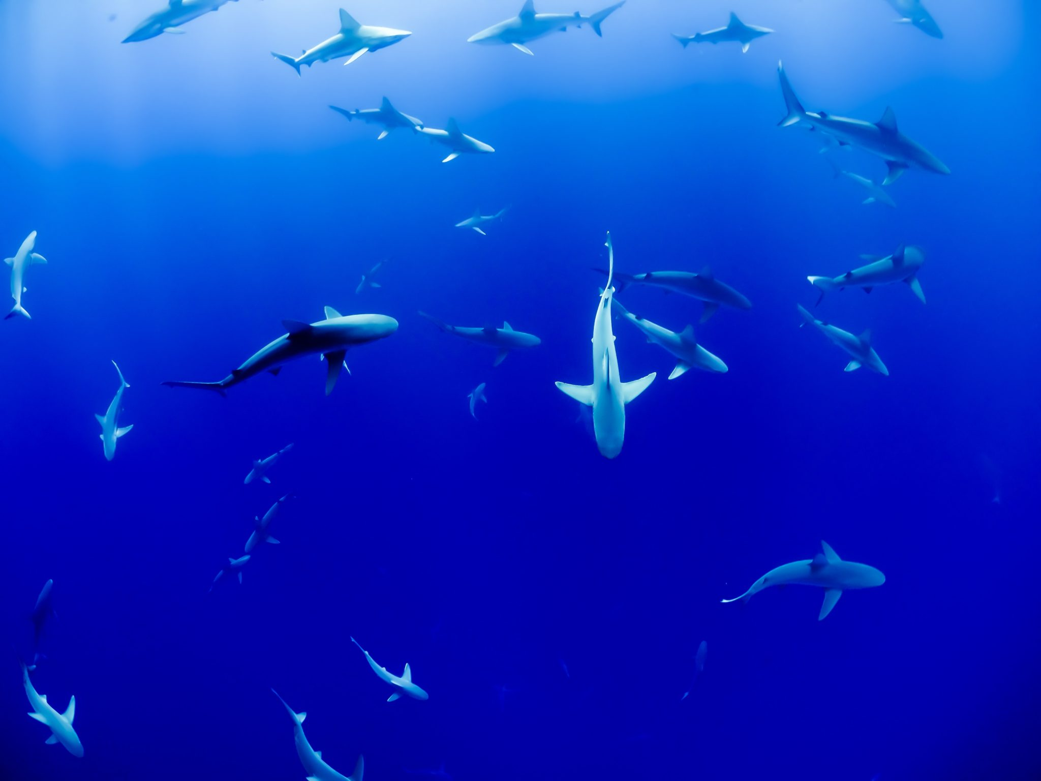 Shark Tourism: Is It Possible To Have An Ethical Shark Dive?