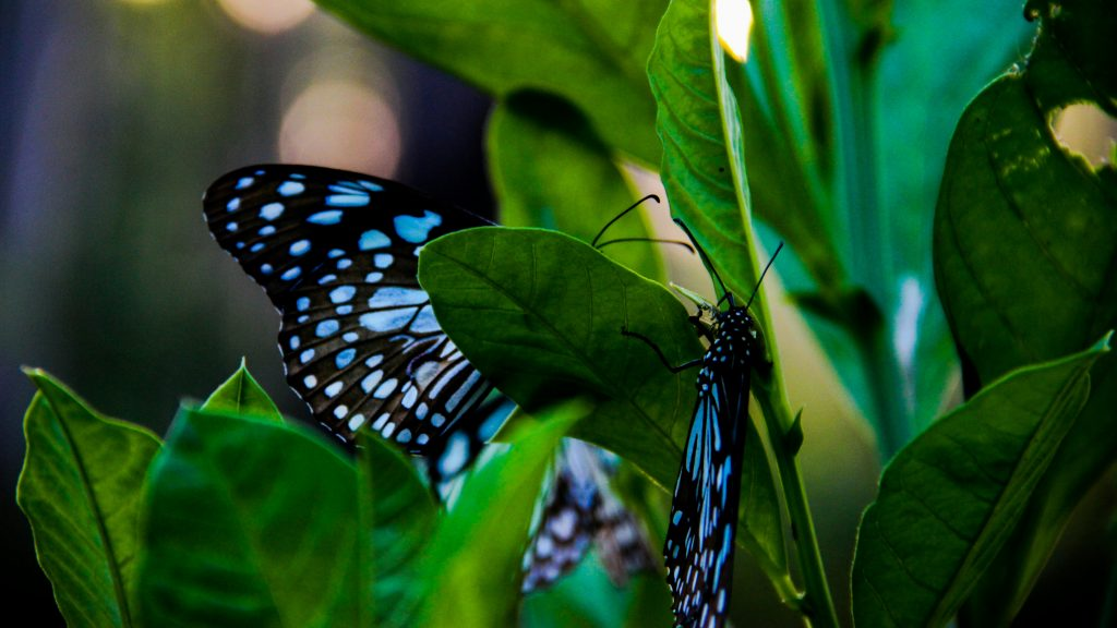 Butterfly garden in Penang. Photo by Haxnorv of Unsplash.